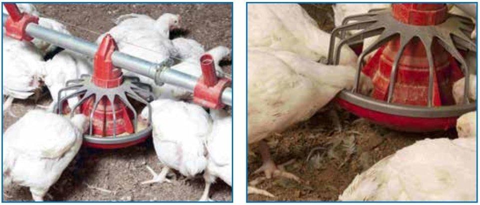 altura de los comederos para pollos de engorde