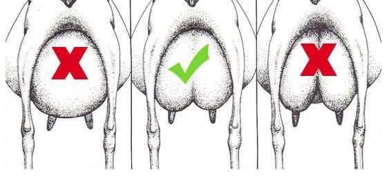 formas de la ubre de la cabra
