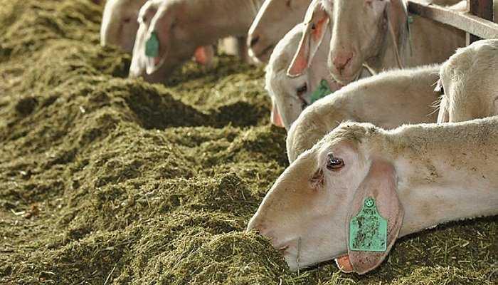 Compuestos nitrogenados en ovinos