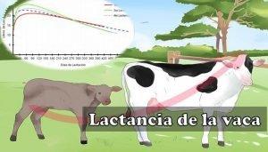 Producción de leche de la vaca