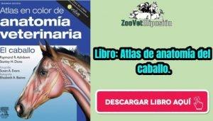 Libro: Atlas de anatomía del caballo