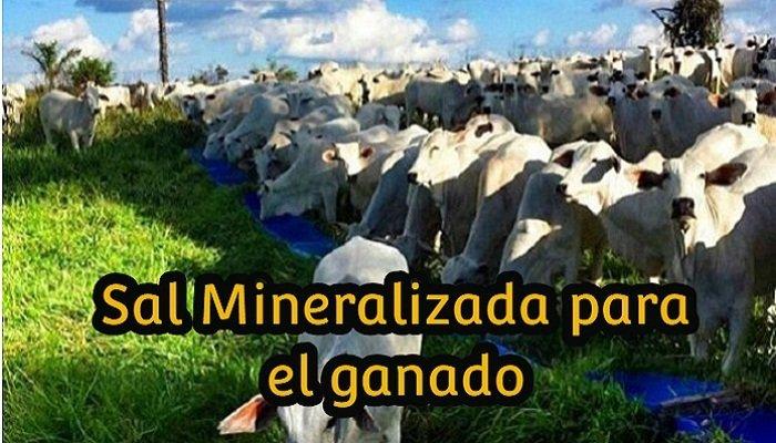 sales mineralizadas en el ganado