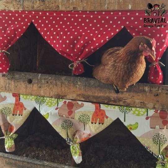 como evitar que las gallinas se coman sus propios huevos