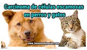 Carcinoma de celulas escamosas en perros y gatos