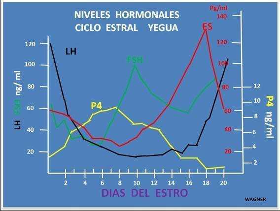 Hormonas del ciclo estral de la yegua