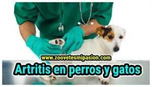 artritis en perros y gatos