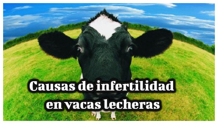causas de infertilidad en vacas lecheras