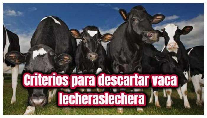 criterios para descartar vacas lecheras