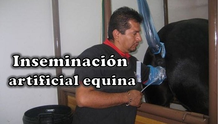 inseminacion artificial equina