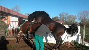 Monta natural en equinos