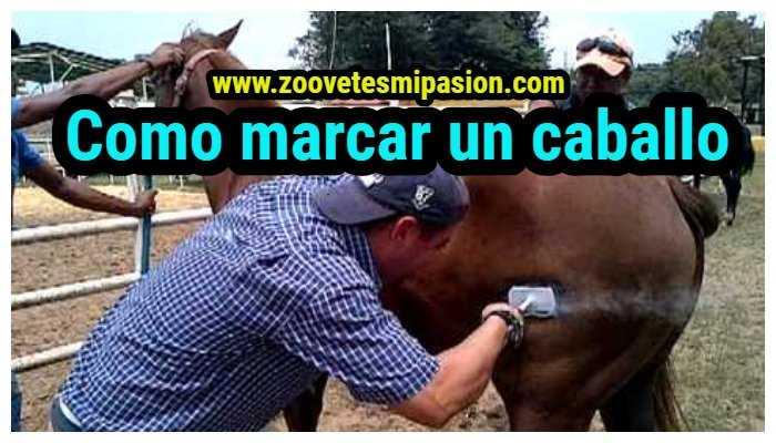 Como marcar un caballo