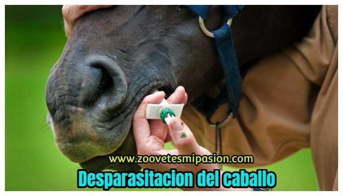 Desparasitacion del caballo