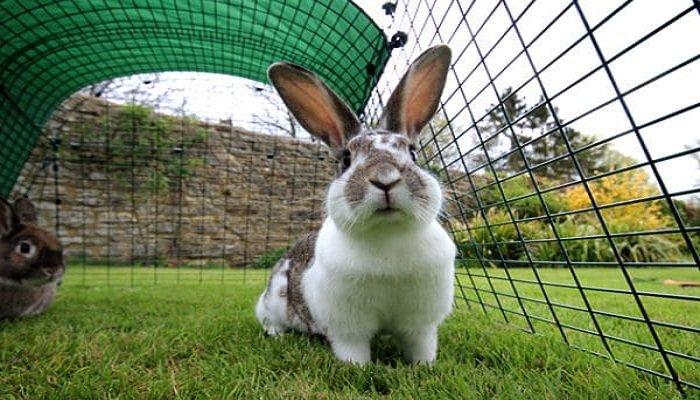 Espacio para conejos