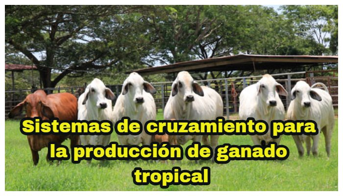 Sistemas de cruzamiento para la producción de ganado tropical