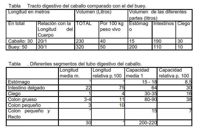 ▷ Anatomía y Fisiología del aparato digestivo del equino.