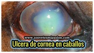 Ulcera de cornea en equinos
