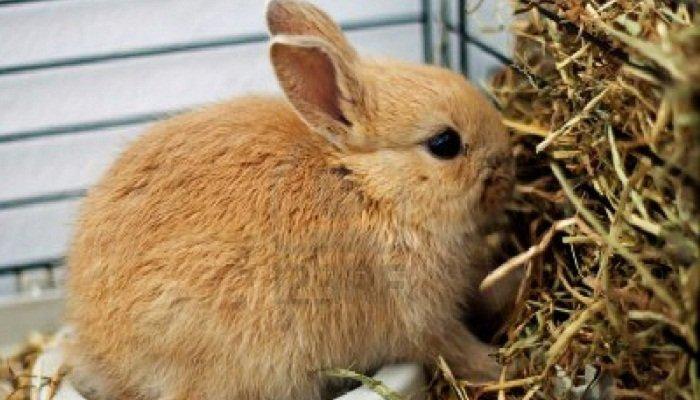 heno para conejos