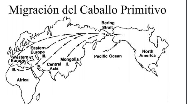 Migración del Caballo Primitivo