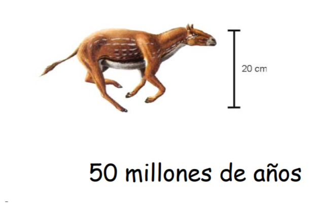 Eohippus, origen del caballo