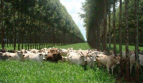 Alimentación del ganado en las buenas practicas