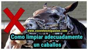 Como limpiar adecuadamente un caballo