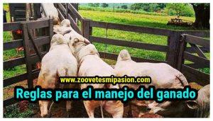 Reglas para el manejo del ganado