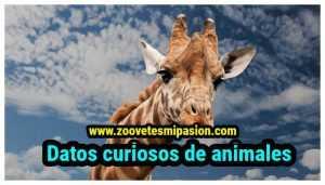 Datos curiosos de animales