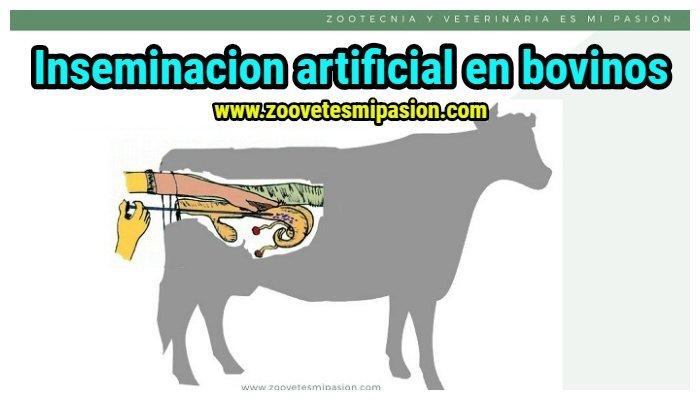 Inseminación Artificial De La Vaca 🐄cToda La Información
