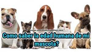 Edad humana de las mascotas
