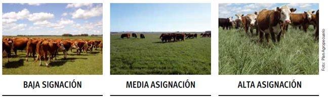 Como saber el consumo de forraje de ganado