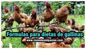 Formulas para dietas de gallinas
