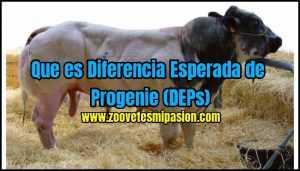 Que es Diferencia Esperada de Progenie (DEPs)