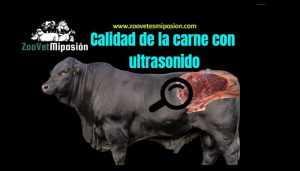 Calidad de la carne con ultrasonido