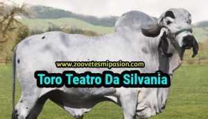 Toro GYR Teatro Da Silvania