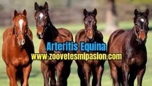 Arteritis Equina