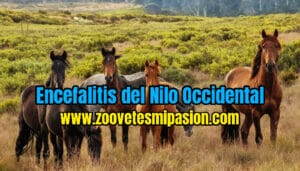 Encefalitis del Nilo Occidental