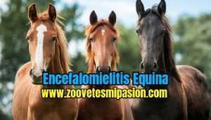 Encefalomielitis Equina