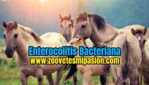 Enterocolitis Bacteriana