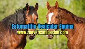 Estomatitis Vesicular Equina