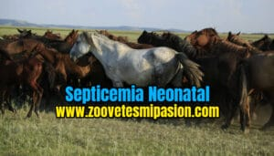 Septicemia Neonatal
