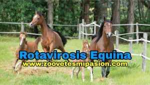 Rotavirosis Equina