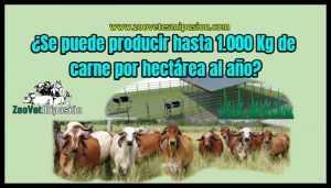 ¿Se puede producir hasta 1.000 Kg de carne por hectárea al año?