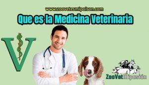 Que es la Medicina Veterinaria