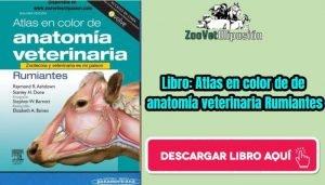 Libro: atlas en color de de anatomía veterinaria Rumiantes
