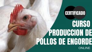 Curso producción de pollos de engorde