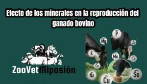 Efecto de los minerales en la reproducción del ganado bovino