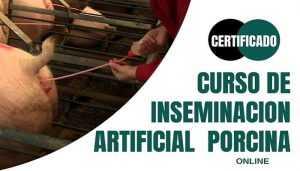 Curso de Inseminación Artificial Porcina Online