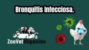 Bronquitis Infecciosa.