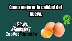 Como mejorar la calidad del huevo.