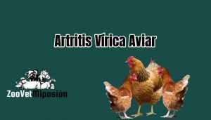 Artritis Vírica Aviar
